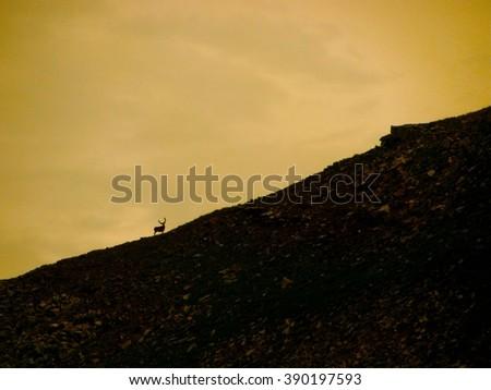 Elk Silhouette - stock photo