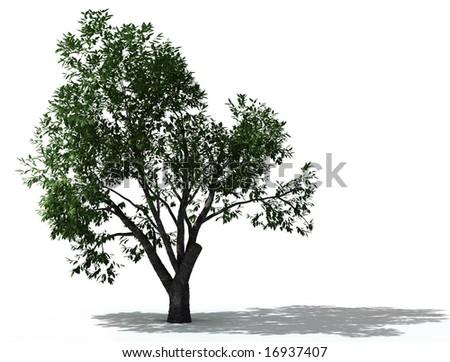 elm-tree - stock photo