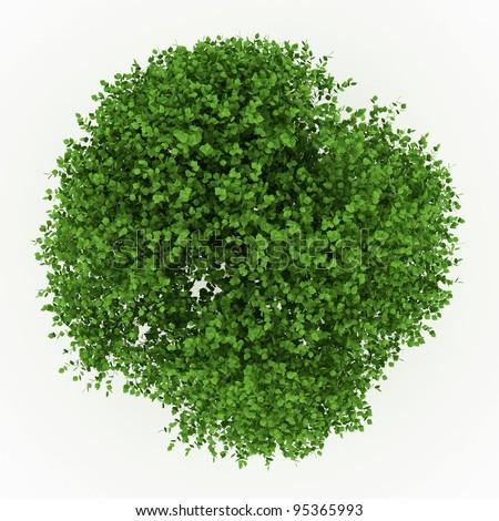 elm tree isolated on white - stock photo