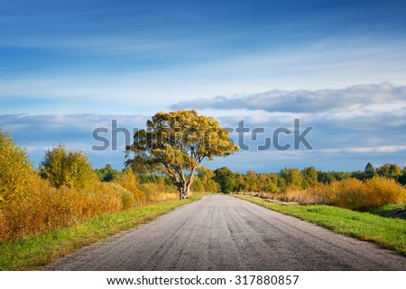Elm tree on the road side in autumn - stock photo