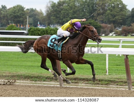 ELMONT, NY - SEPT 29: Jockey Ramon Dominguez guides Stormy Len to his first win at Belmont Park in Elmont, NY on Sept 29, 2012. - stock photo