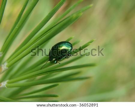 Emerald On Edge - stock photo