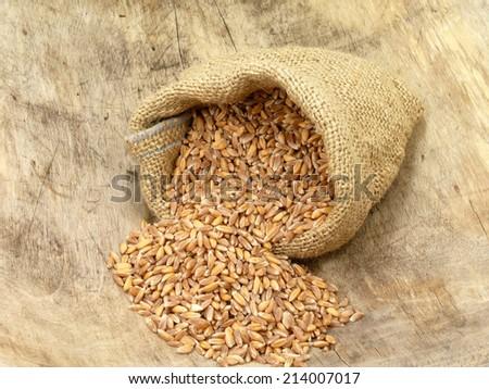 emmer wheat - stock photo