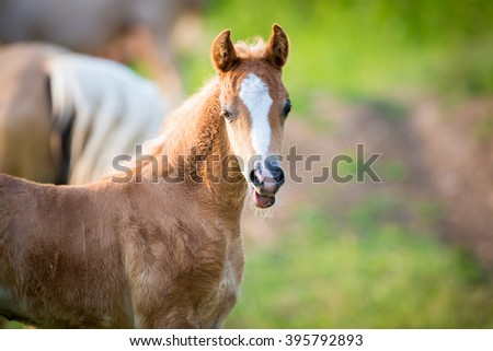 Emotion of small foal - stock photo