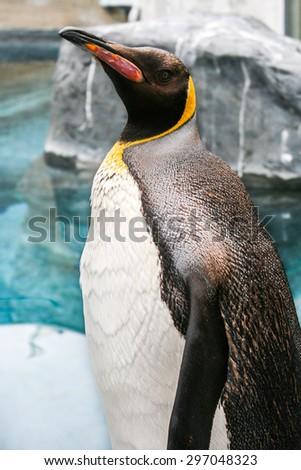 Emperor Penguin - stock photo