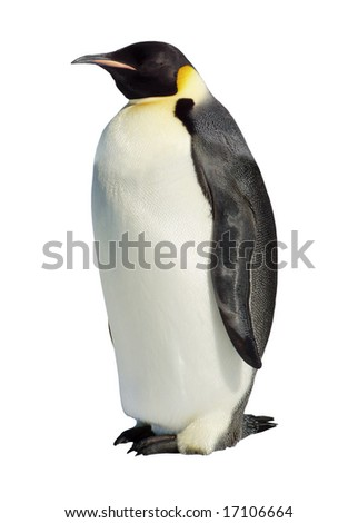 Emperor penguin isolated against a white background - stock photo