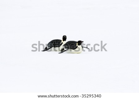 Emperor penguins (Aptenodytes forsteri) sliding on the ice in the Weddell Sea, Antarctica - stock photo