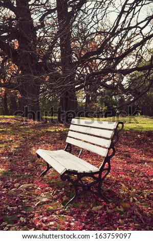 Empty bench under maple trees, falling leaves on ground, vintage photograph look  - stock photo