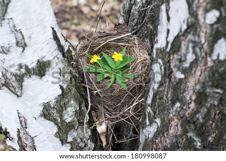 Empty bird's nest closeup. Symbol of the family and home. - stock photo