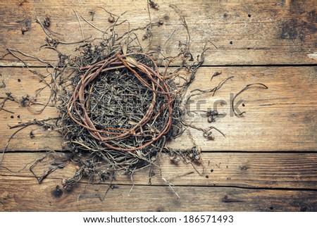 Vintage birds nest pictures
