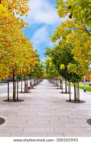 Empty city pedestrian sidewalk pavement with colorful autumn foliage on the trees in city park - stock photo