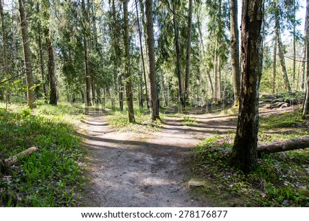 empty country road in spring forest with perspective and shadows - stock photo