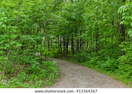 Empty footpath in summer forest. Big green trees everywhere, sticks, leaves and shadows on the path. - stock photo