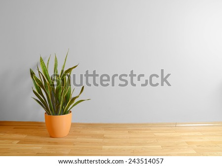 empty interior with wooden floor, plant and grey wall  - stock photo
