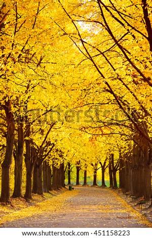 Empty Linden alley in Kiev Botanical garden in the fall. Ukraine - stock photo