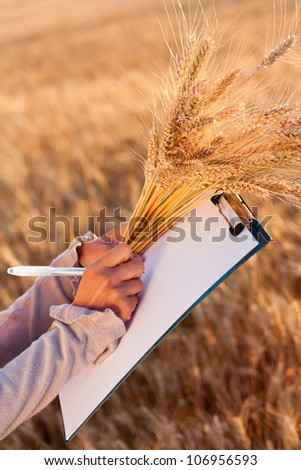 Empty paperwork, pen and golden ears wheat in women's hands against a background of wheat field - stock photo