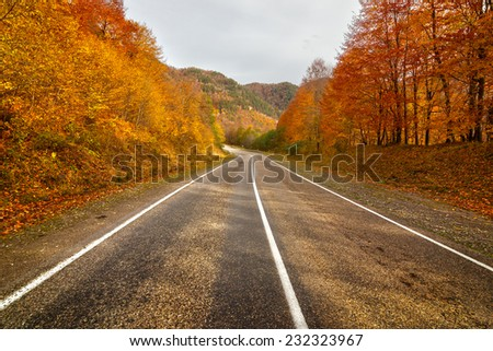 Empty rural asphalt road in autumn with colored trees in Arkhyz, Karachay-Cherkessia, Russia - stock photo