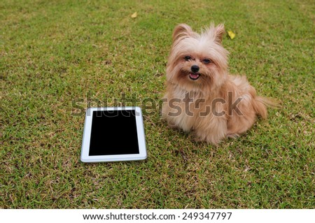empty screen tablet with cute dog in the field - stock photo