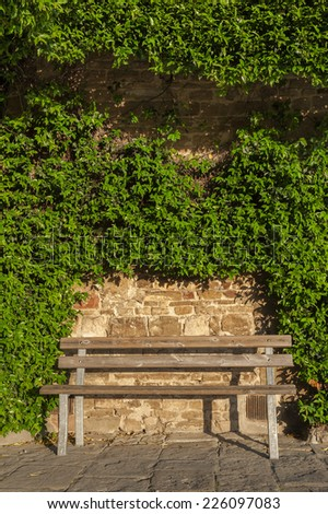 empty seat and of wall covered with ivy in garden - stock photo