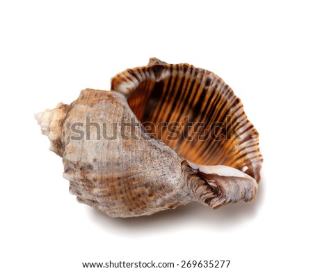 Empty shell from rapana venosa. Isolated on white background. - stock photo