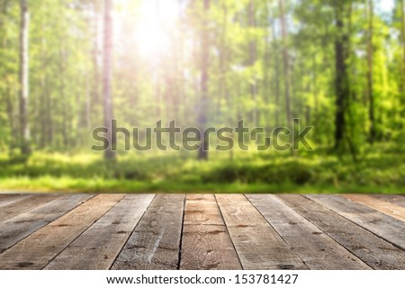 empty space of green forest and sunset  - stock photo