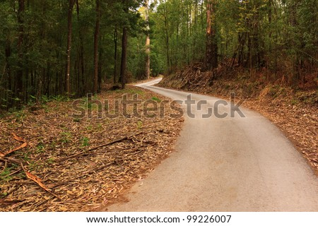 Empty tarmac road on middle of woods - stock photo