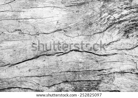 Empty White Old wood cracked texture background - stock photo