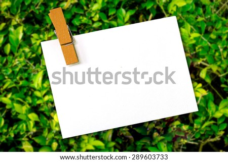 empty white paper with wood clip on green leave background  for text. - stock photo