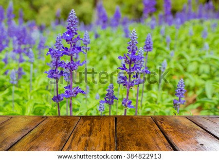 empty wooden table and blurred image of lavender field on sunny day - stock photo