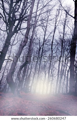 Enchanted forest with a light background.  - stock photo