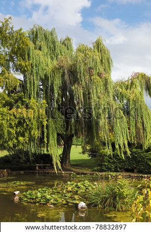 Enchantingly beautiful park-garden Sigurta. Shallow pond, weeping willows and lily - stock photo