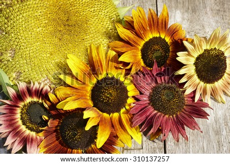 End of summer with sunflowers - stock photo
