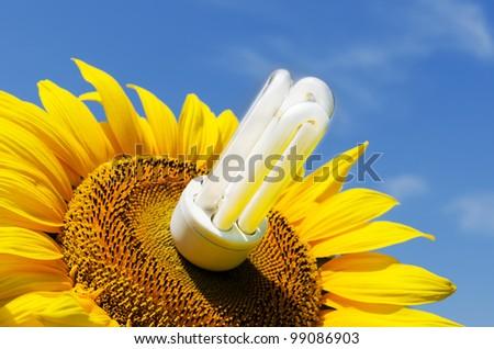 energy saving lamp in sunflower - stock photo