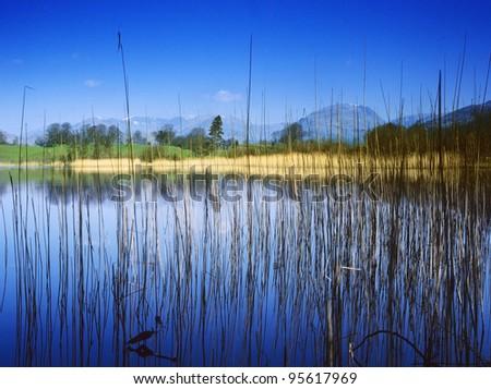 england cumbria lake district national park far sawrey near where beatrix potter lived - blelham tarn high wray estate - stock photo