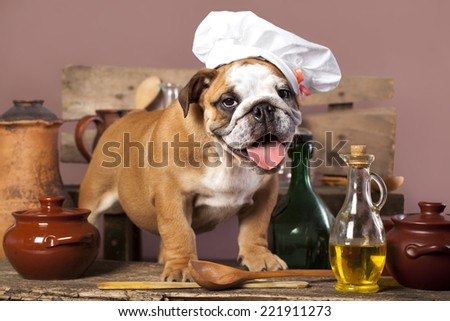 english Bulldog puppy in chef's hat - stock photo