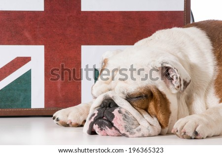 english bulldog sleeping in front on british flag - stock photo