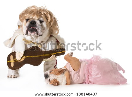 english bulldog wearing rock star costume with fan fainting at his feet - stock photo