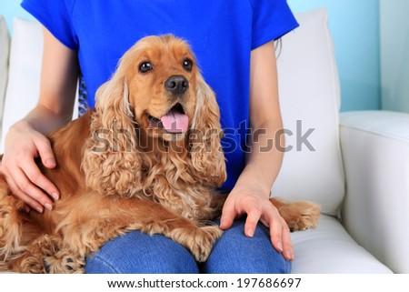 English cocker spaniel on sofa with owner - stock photo