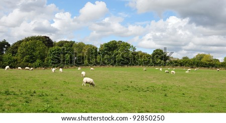 English Countryside Landscape View of Sheep Grazing in a Green Field with a Beautiful Sky Above - stock photo