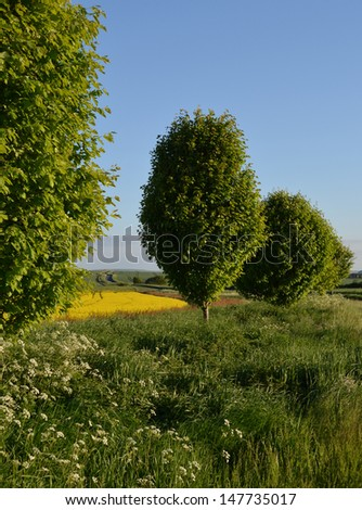 English Countryside with grass, trees and yellow field - stock photo
