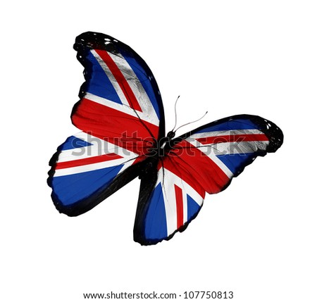English flag butterfly flying, isolated on white background - stock photo