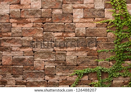 English ivy grows up a rock wall. - stock photo