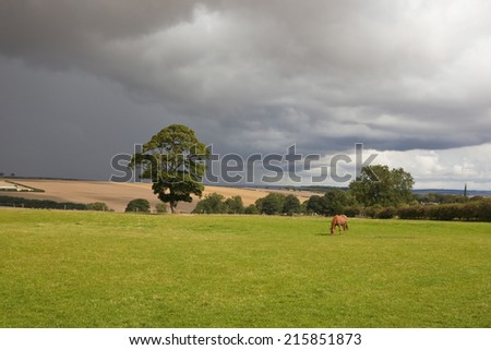 English landscape with a bay horse grazing a sunlit meadow against a background of dark storm clouds on the Yorkshire wolds - stock photo