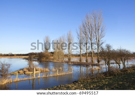 english winter landscape with a flooded field with poplar trees and a barbed wire fence under a blue sky - stock photo