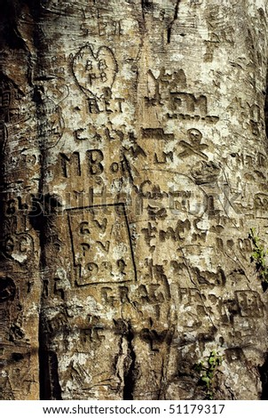 engraved tree with graffitis - stock photo