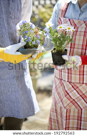 Enjoy gardening couple, hand with a seedling - stock photo