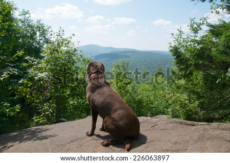 Enjoying the view at the summit of the mountain the chocolate lab relaxes - stock photo
