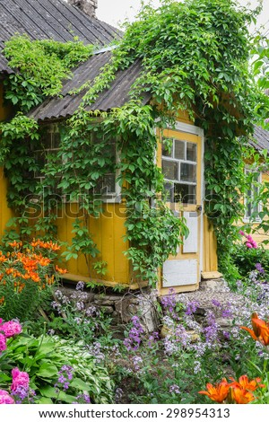 Entrance to the old rustic yellow house decorated parthenocissus and garden flowers. Russia - stock photo