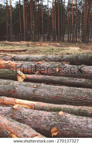 Environment, nature and deforestation forest concept - felling of trees in the woods - stock photo