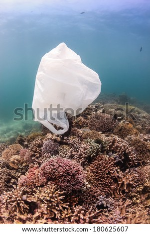 Environmental Damage - a discarded plastic bag floats past tropical corals.  Discarded plastic is a lethal hazard to marine turtles - stock photo